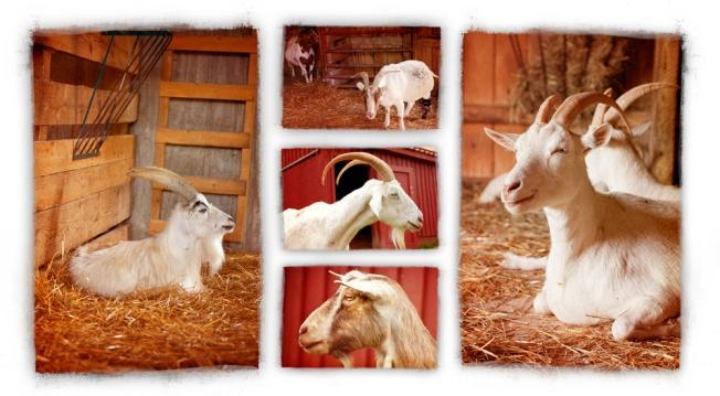Farm5_lr