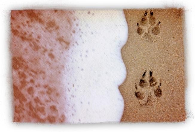 pawprintsSingleLR