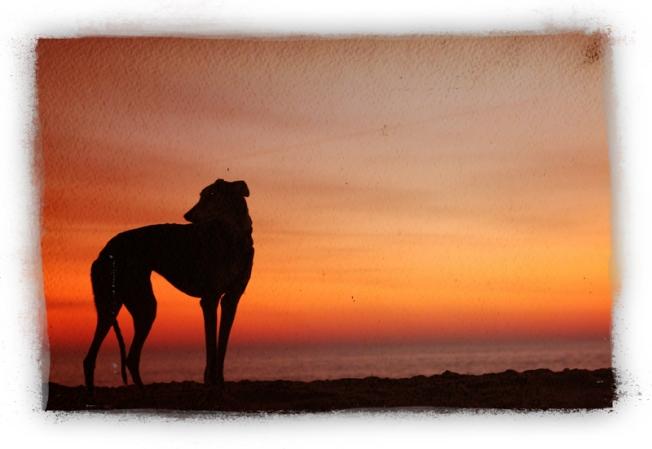 SunsetSingleLR