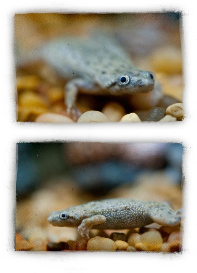 frogger-2_lr