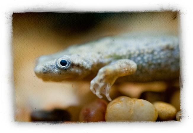 frogger-3_lr